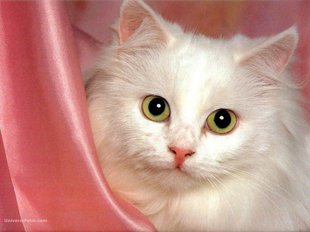 Magnifiques photos de chatte