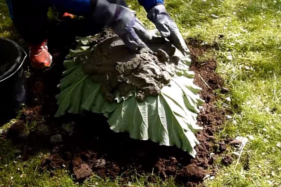 il positionne quatre feuilles de rhubarbe sur une butte de terre ce qu il r alise par la suite. Black Bedroom Furniture Sets. Home Design Ideas